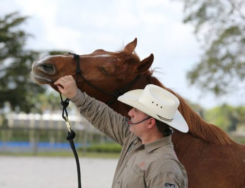 Sonny Garguilo clinic a success for rescues and participants
