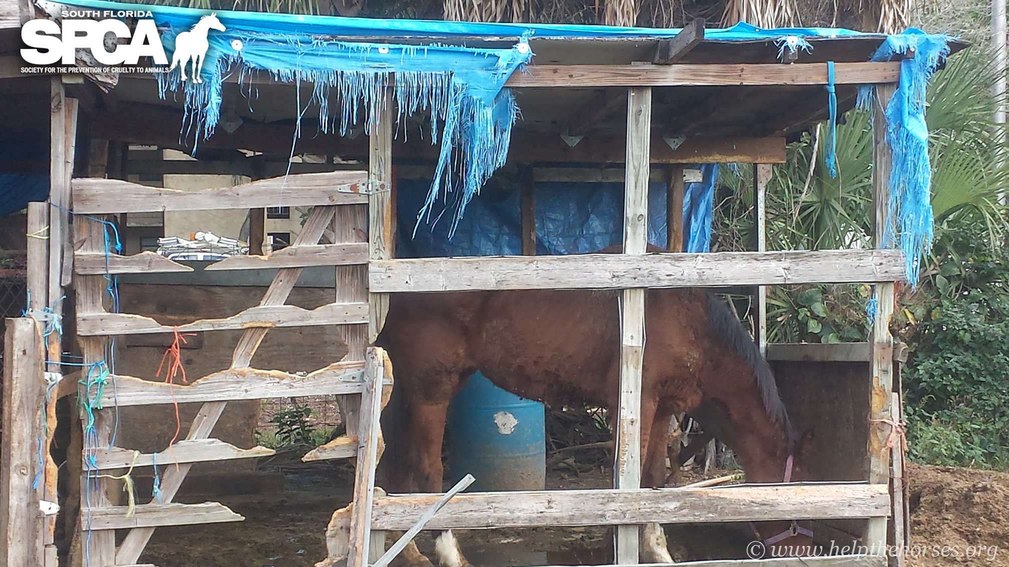 Six starved off-the-track Thoroughbreds seized by police, turned over to SPCA