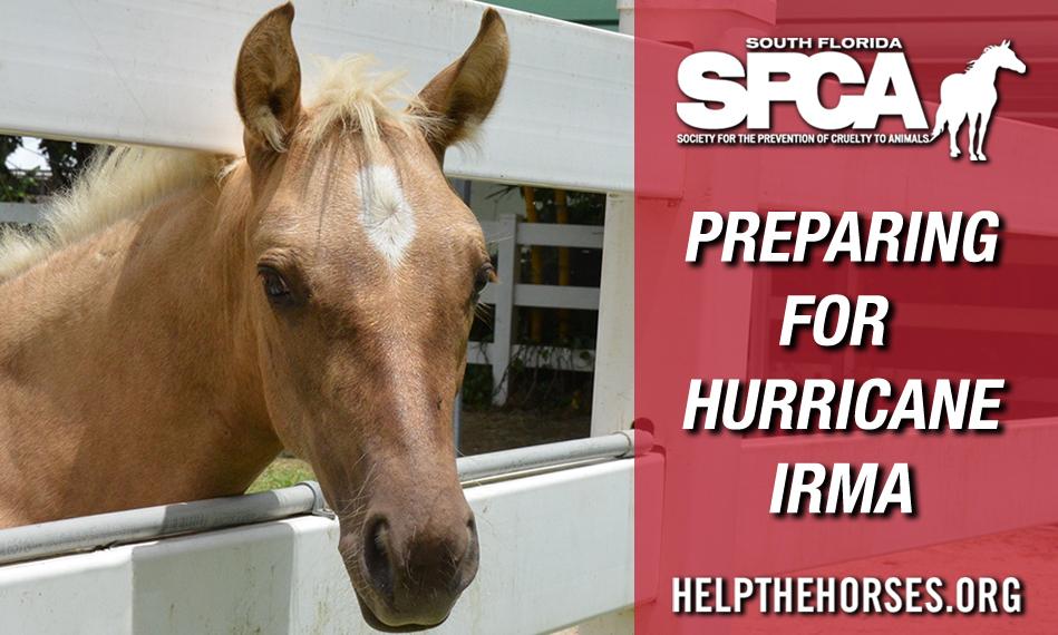 South Florida SPCA Bracing for Hurricane Irma with 55 Horses