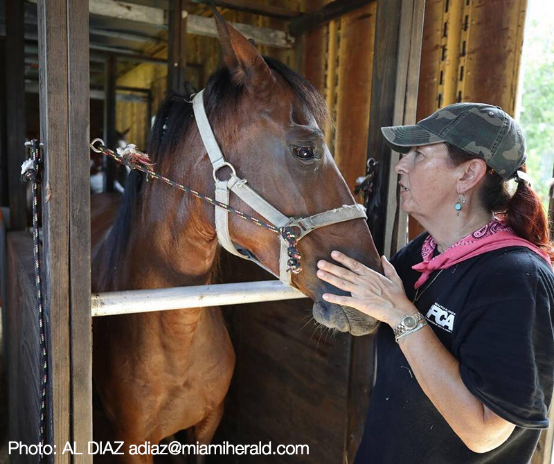 South Florida SPCA Scrambles to Protect 57 Horse Herd from Hurricane Irma