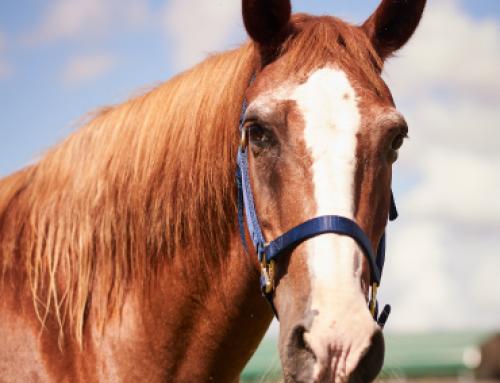 Test Horse
