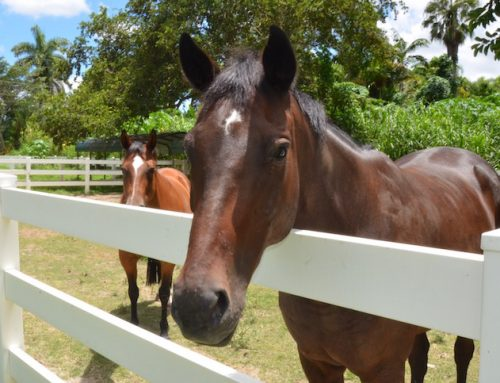 South Florida SPCA earns Thoroughbred Aftercare Alliance Reaccreditation through 2019