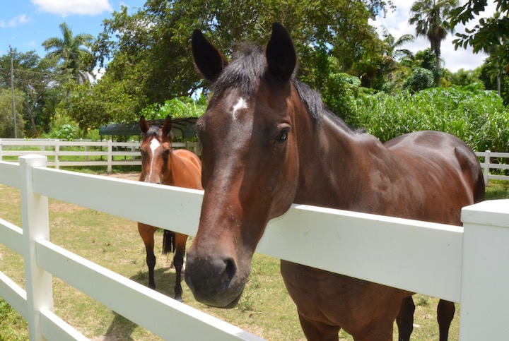 Thoroughbred Aftercare Alliance Reaccreditation through 2019