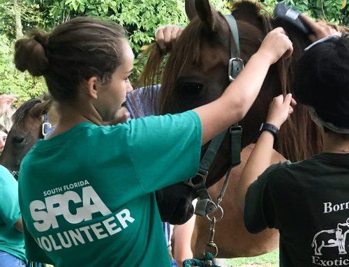 July 24th Volunteer Orientation