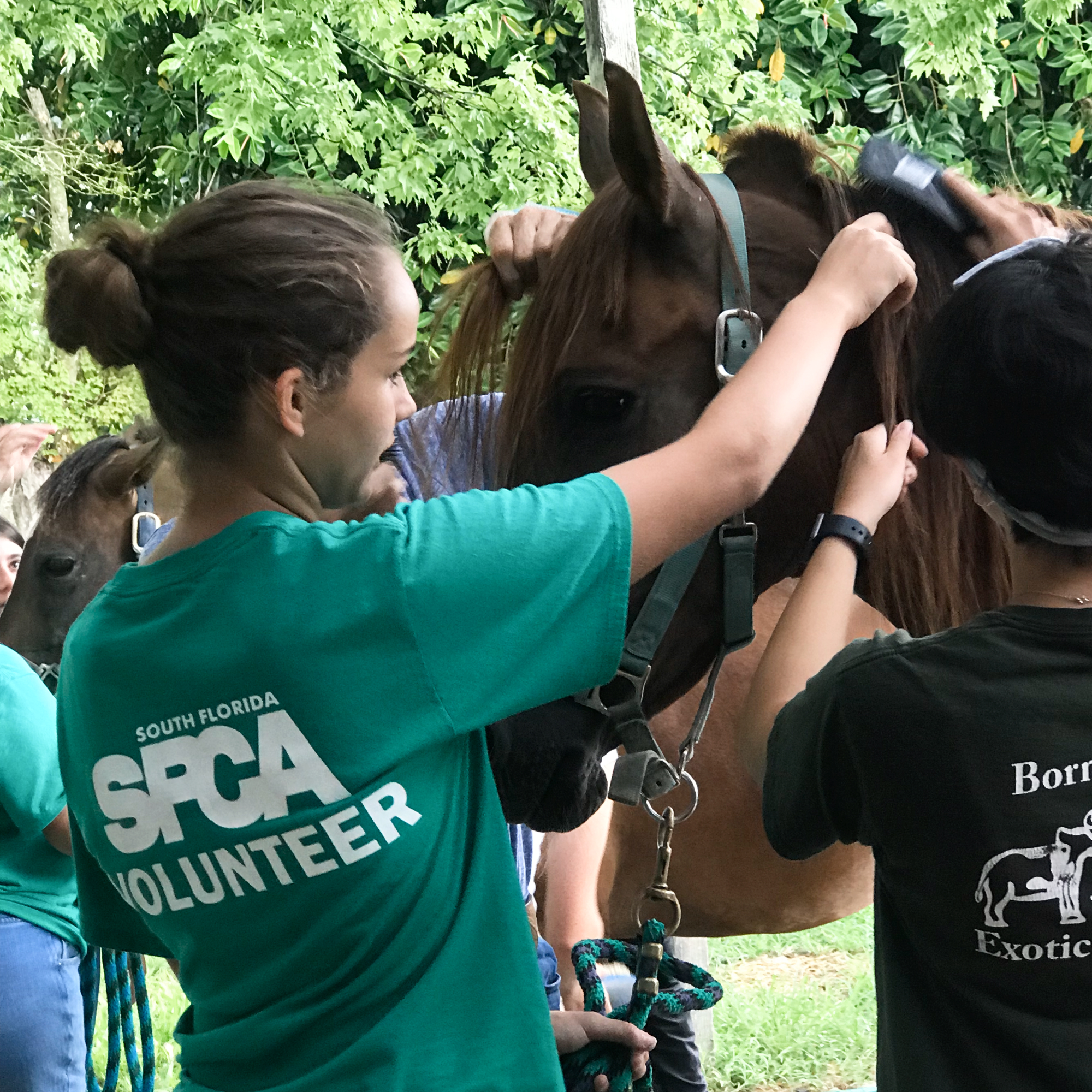Volunteering at the South Florida Society for the Prevention of Cruelty to Animals