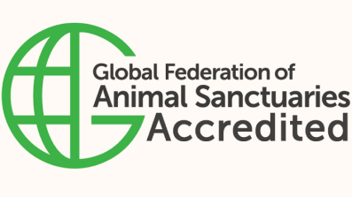 GFAS_Accredited_logoPartners
